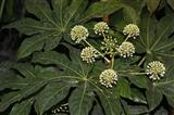 中科院植物所温室