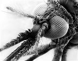 环球网疟疾图片