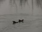 鸭影渡寒塘