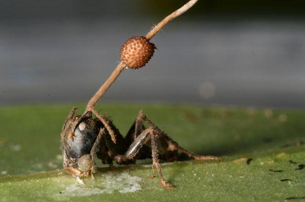 蚂蚁小制作步骤图