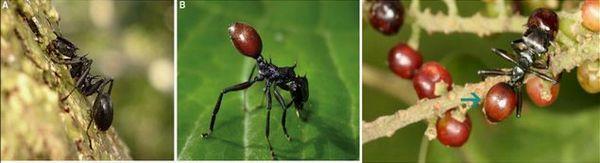 蚂蚁身体结构图