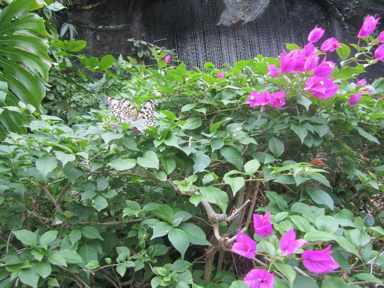 蝴蝶谷-中心广场-贝壳馆›查看原图上一张下一张幻灯播