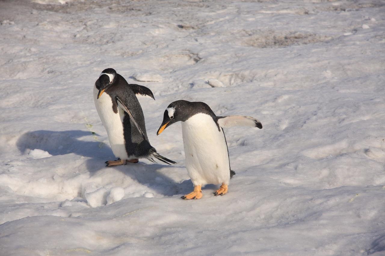 壁纸 动物 企鹅 1280_853