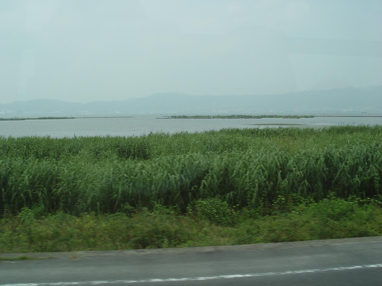 琵琶湖案边湿地