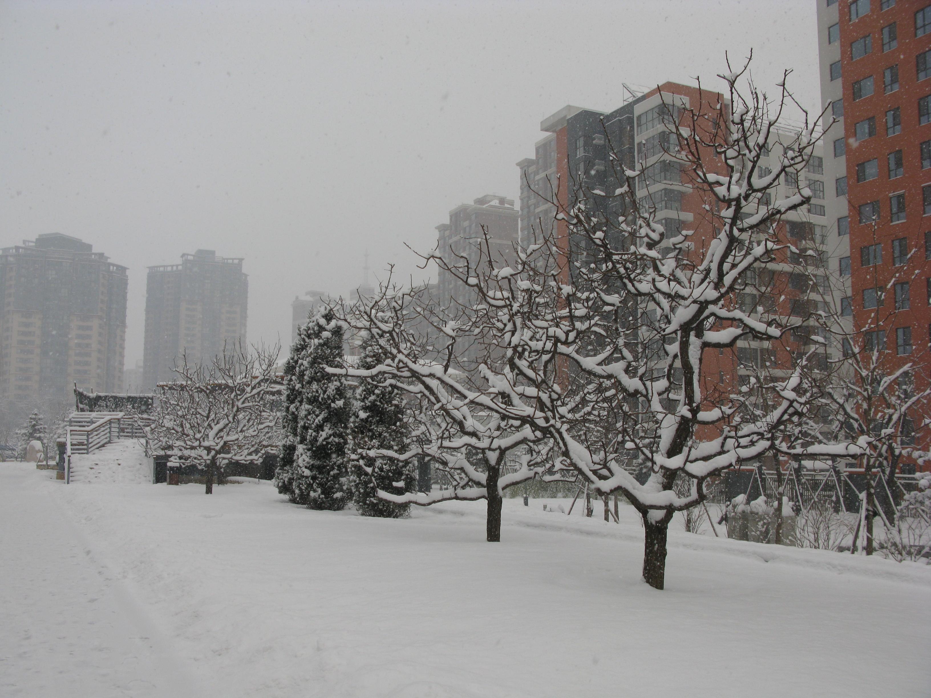 很久没有见到这么大的雪了