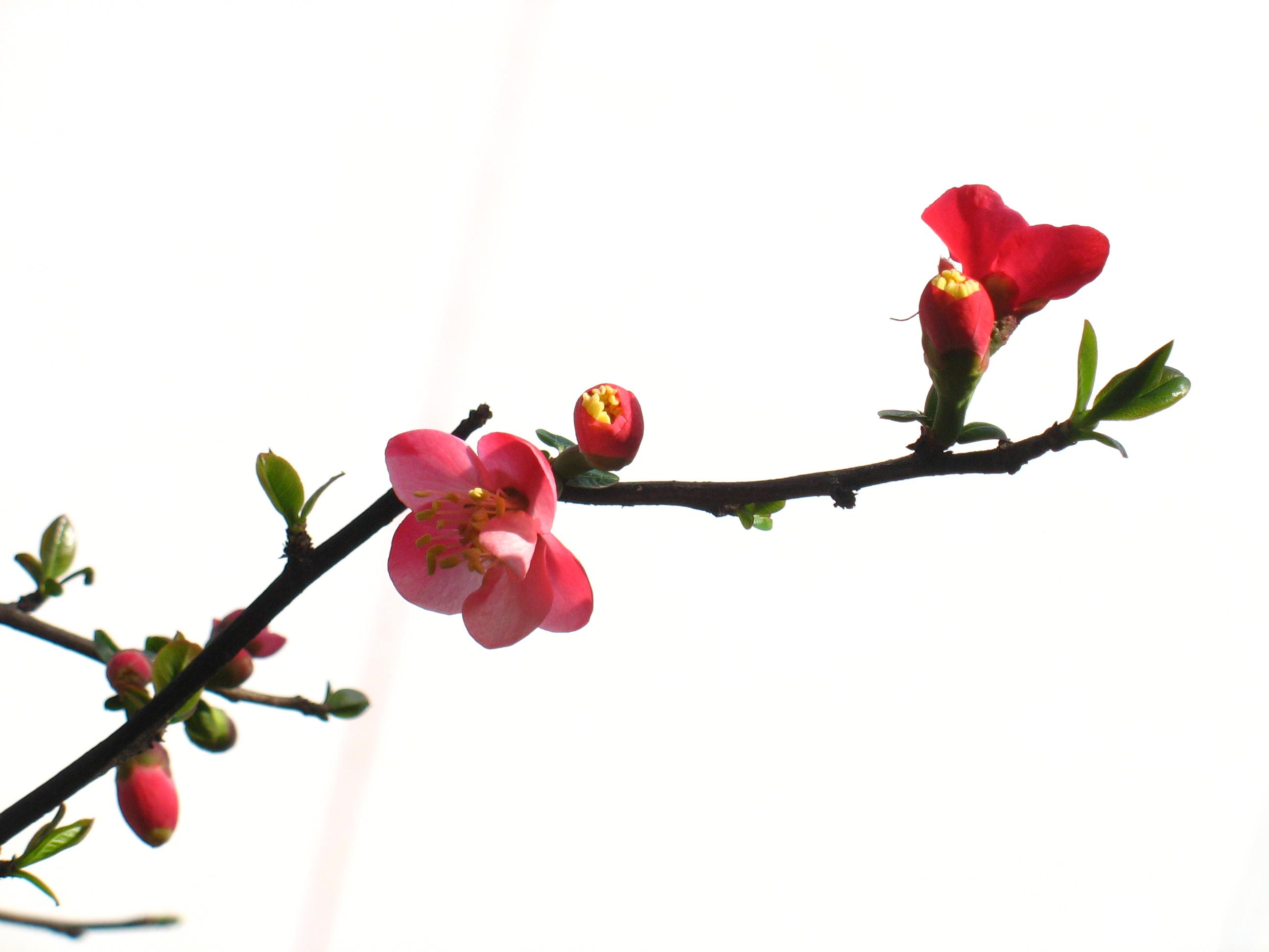 孙晓梅图片_科学网—春绽海棠枝 - 徐耀的博文