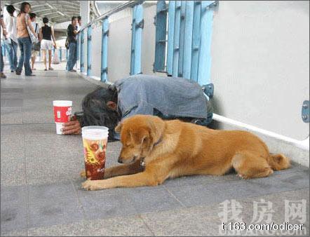 狗和人,谁更有尊严?