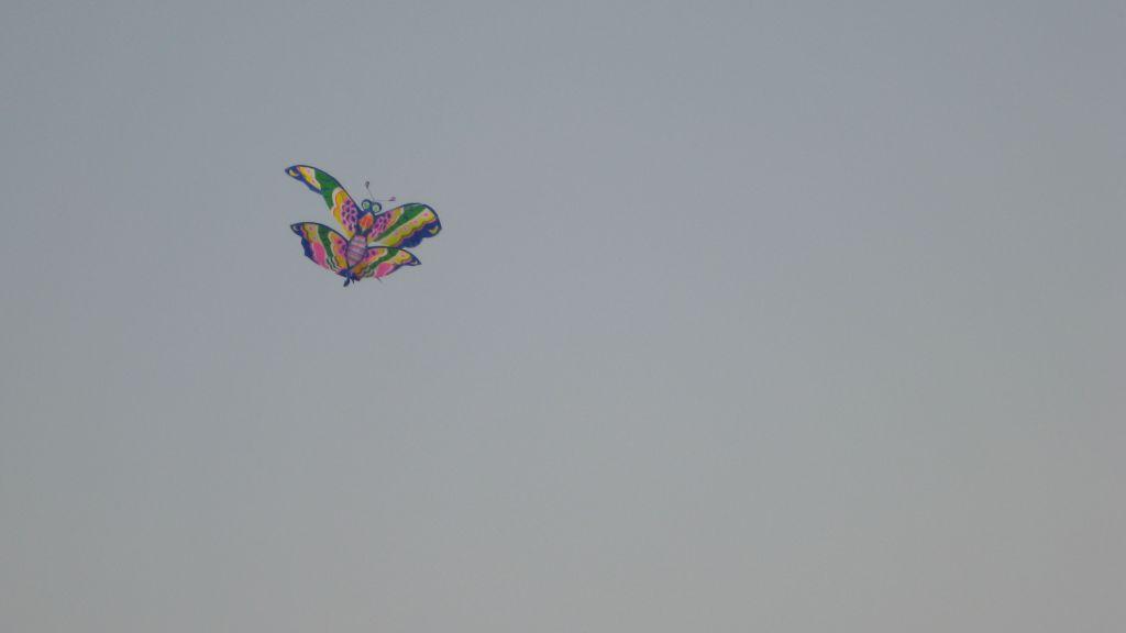 科学网—我们放飞的蝴蝶风筝