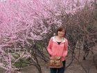 春题白鹿原