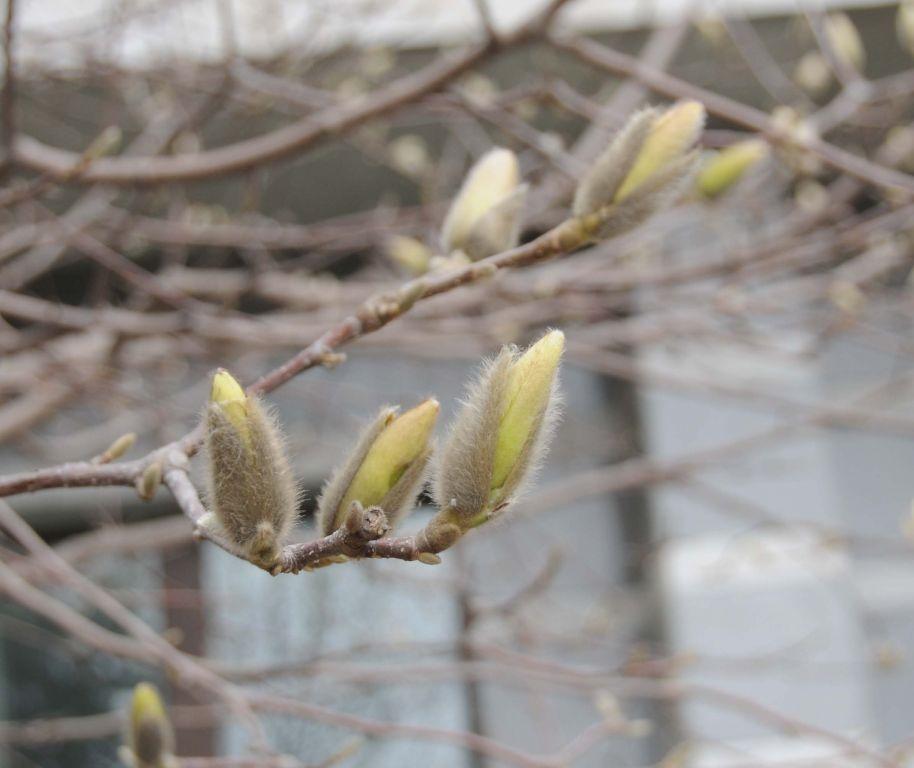 知道了春天是万物生长的季节