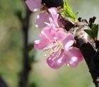 俺院里的春天(续1)