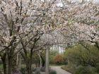 东郊樱花园
