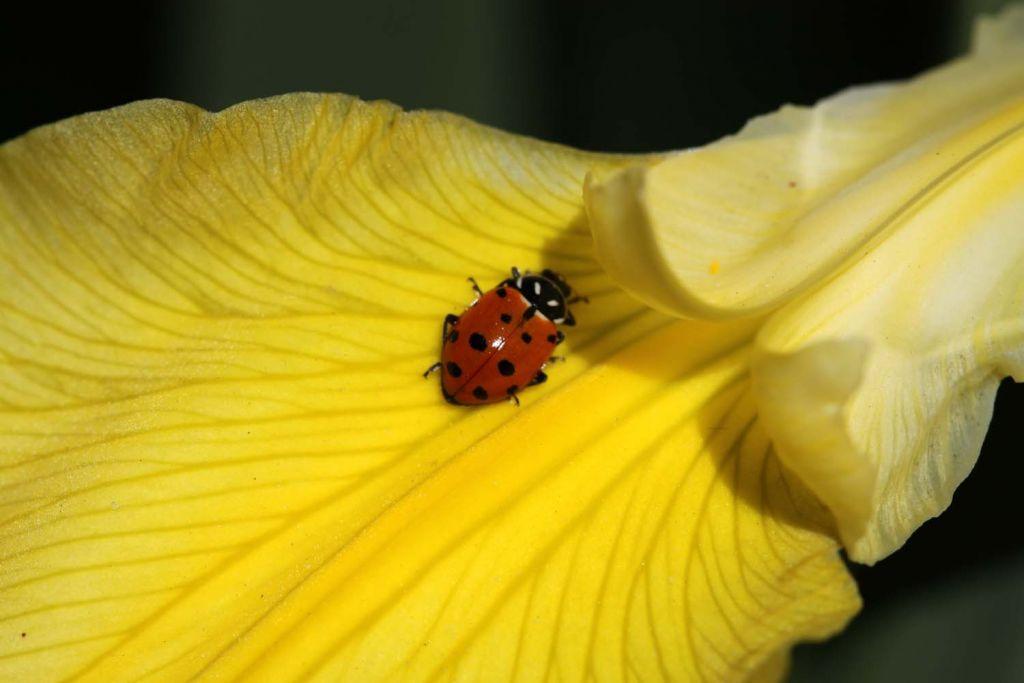 几张与昆虫有关的照片,与大家分享,可惜还差一些,如可爱的蜻蜓之类的.