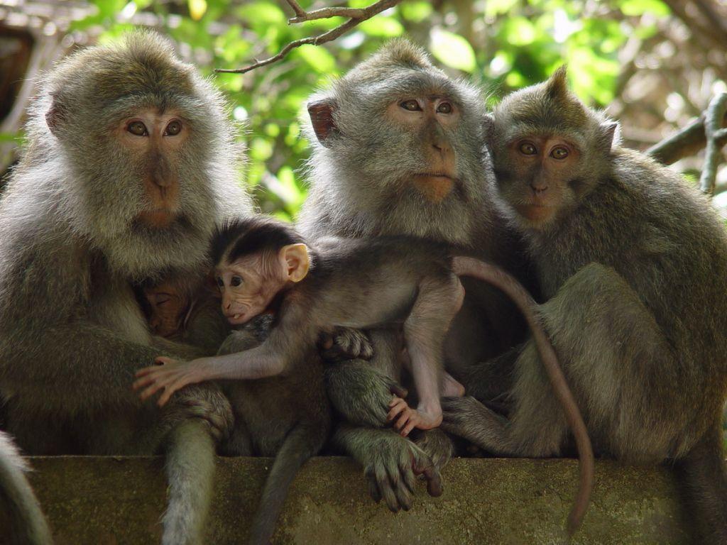 动物复杂画画图片