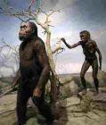 人类学是什么