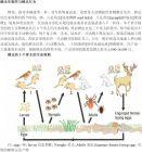 蜱虫防治手册图片节选与全文下载