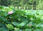 仲夏植物园