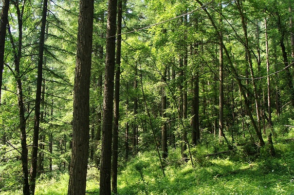 双休日,课题组成员和学生去庞泉沟国家自然保护区放松了两天。期间参观了自然保护区的野生动物标本馆,褐马鸡保护区,八道沟原始森林,最后项目是庞泉沟漂流。也放几张照片,秀一秀山西的自然风光。 感谢我们的合作方太原西科纳米技术有限公司,不仅长期支持高比表面积碳化硅的研发和应用,而且为此次活动提供了全面支持,包括旅游线路策划、食宿安排、人力以及财力上的支持。