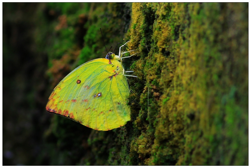 食虫植物小孩子不感兴趣;蝴蝶的种类还真不少,丫头看得蛮高兴.