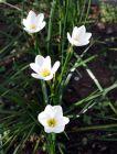 八月花开(1):白色兰花