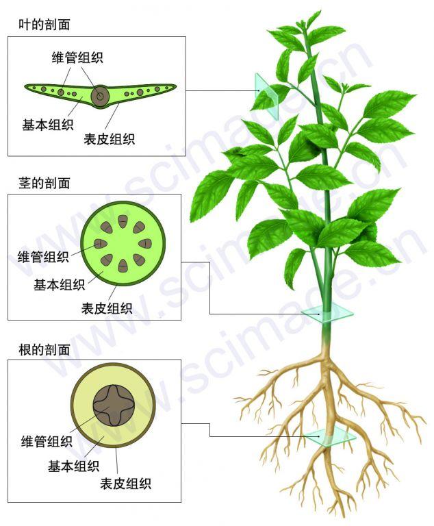 嘲风插图设计作品-植物