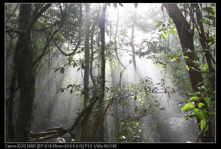 相关链接: 绿石林位于葫芦岛东面,面积约 225 公顷,是西双版纳国家级