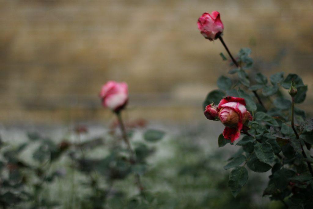 基辅 秋天的童话 玫瑰墓园