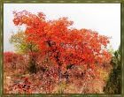 秀美坡峰岭,雾中赏红叶
