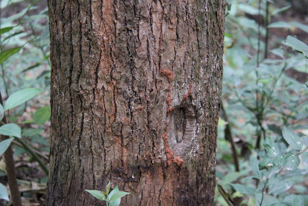 科学网—白蚁的危害