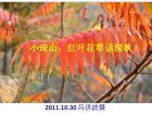 小珠山摄影:红叶花草话深秋