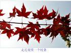 小珠山摄影:红叶花草话深秋(续)