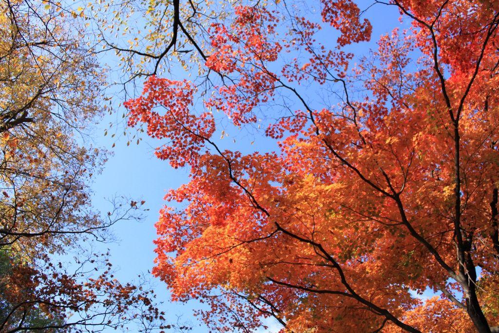 秋天的树叶环境布置