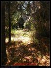 小木屋和裸果