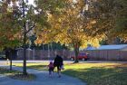 城里的秋色