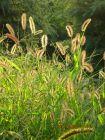 神采飞扬的野草