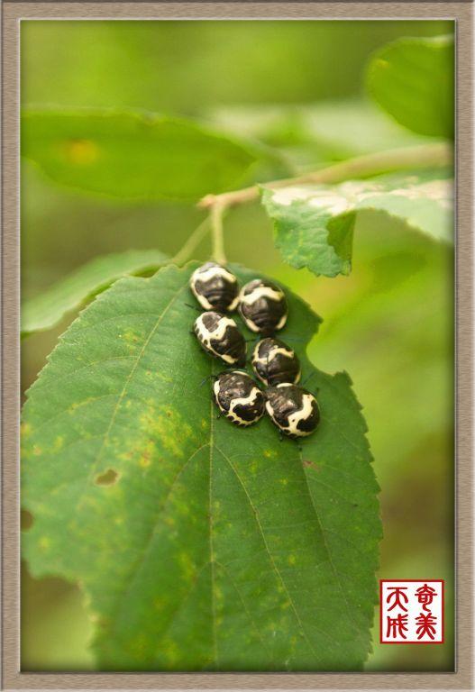 泡泡蛙—蝽—虫卵—蜜蜂——可爱的小动物专辑(1)