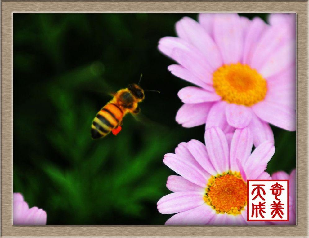 科学网—泡泡蛙—蝽—虫卵—蜜蜂——可爱的小动物