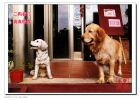 台湾的狗狗与大陆的狗——可爱的小动物专辑(2)