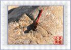 蜻蜓—蛛网—螳螂——可爱的小动物专辑(3)