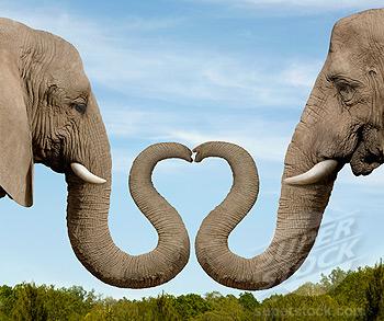 科学网—动物组成的心的图案