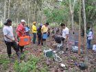 热带雨林的土壤呼吸对比观测