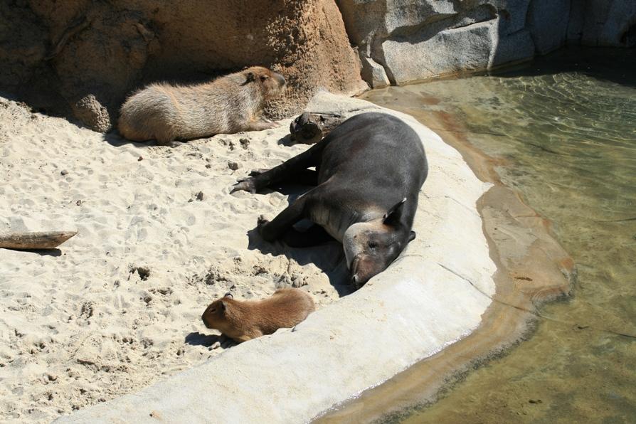 科学网—镜头里的圣迭戈动物园
