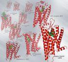 Progress of present GPCR structure