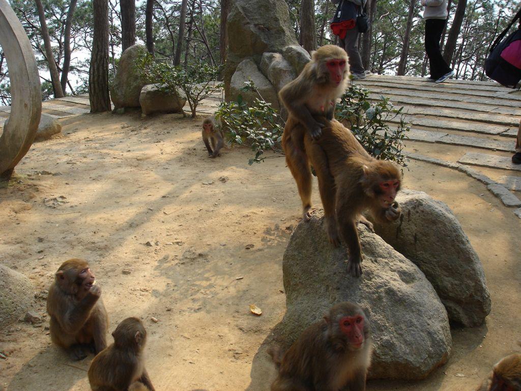 到动物园去,猴山是游客最多的地方