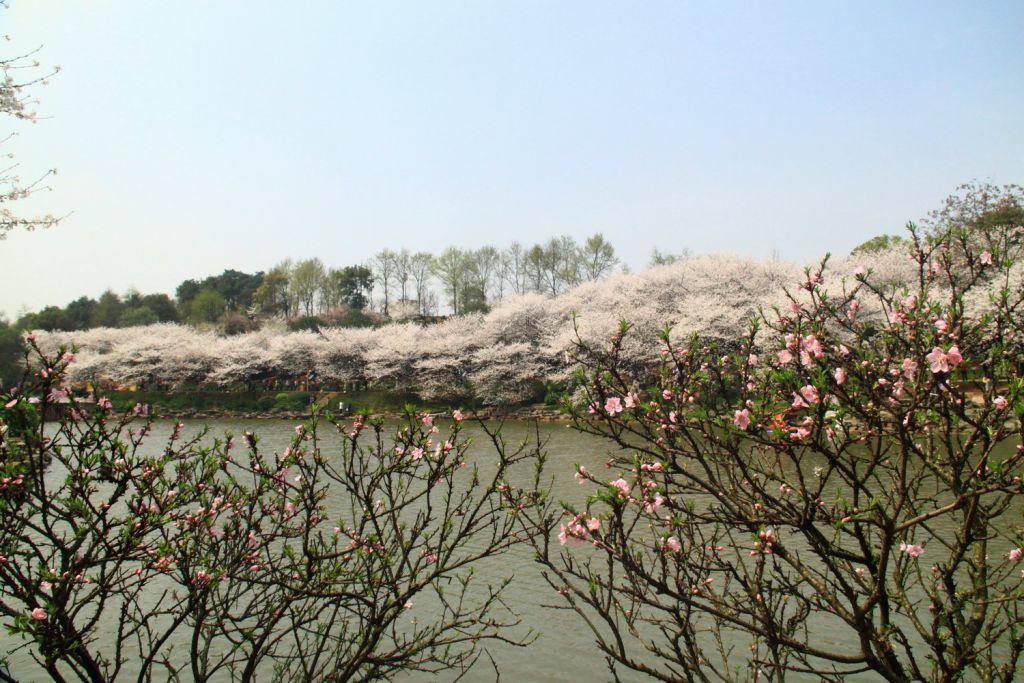 长沙植物园樱花湖采风