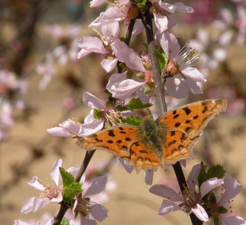 北国的春天好像蜜蜂多