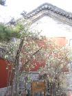 潭柘寺的非松类树木