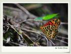 生存之道--蝴蝶翅膀的色彩与图案