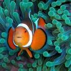 【科普】海洋酸化及其生态学问题