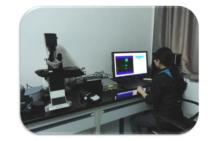 科学网—转盘共聚焦荧光显微镜